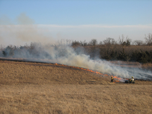 brush burning